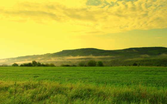 поле, трава, небо, trees, холмы, oblaka, дымка, травы, лес, summer, landscape,