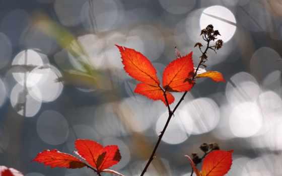 красные, осень, листва, branch, золотая, осенние, целикомв, цитатник, inka, листочки,