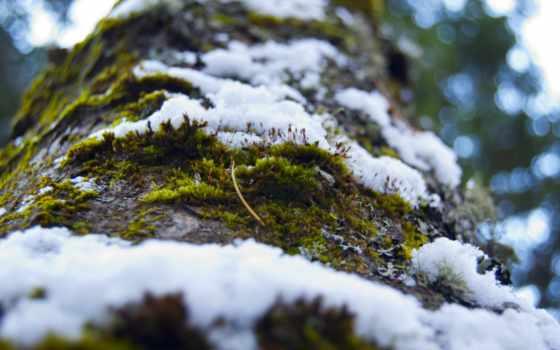 cây, desktop, hành, mùa, nhiên,