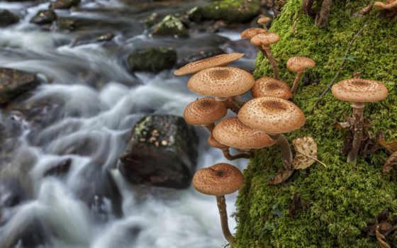 мох, макро, грибы, опята, река, природа, вода,