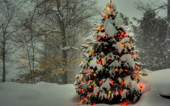 дерево, лесу, новогодняя, наряженная, елки, объявление, дек, продаже,