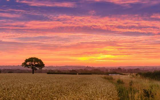 пшеница, поле Фон № 80996 разрешение 2560x1600
