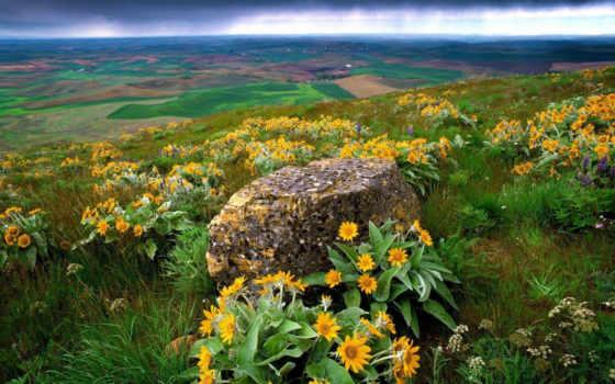 цветы, горы, камень