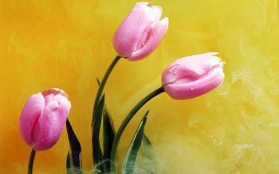 yellow, цветы, открытки