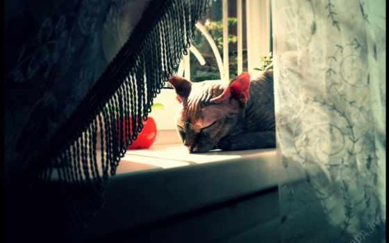 сфинкс, кот, shadow, console, дек, подоконник, browse,