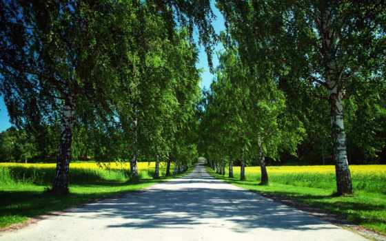 summer, природа, дорога, рапс, trees, norwegian, березы, time, margin, года,