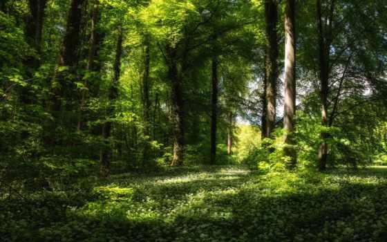 весна, лес, цветы, трава, trees, природа,