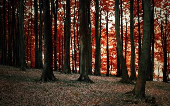 duvarkagidimark, осенними, листьями, усыпанный, www, окно,