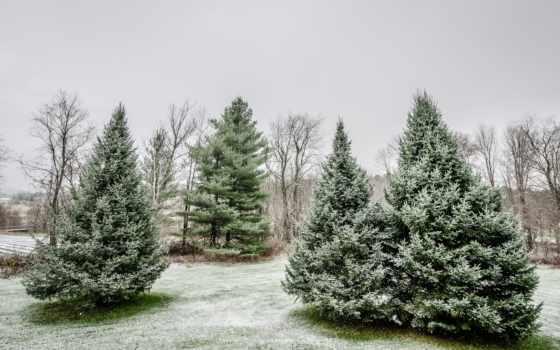 trees, иней, природа, fin, осень, глубокая, fonds, ecran,