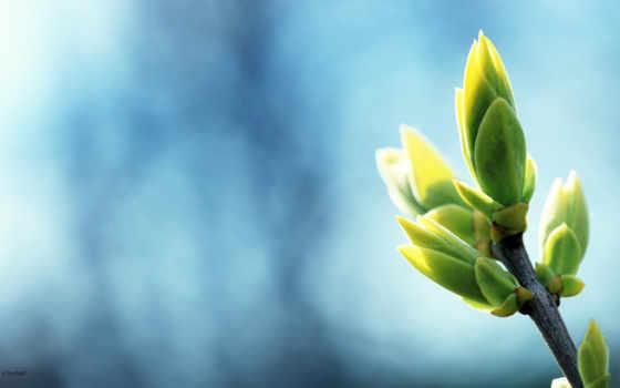 plants, зелёный, макро, весна, растение, you, desktop,
