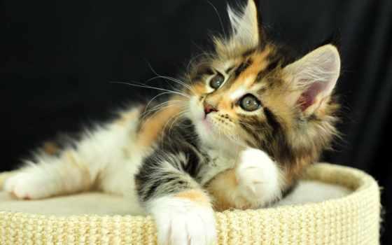 feline, кот, локитреда