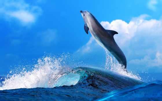 world, underwater, море, ocean,