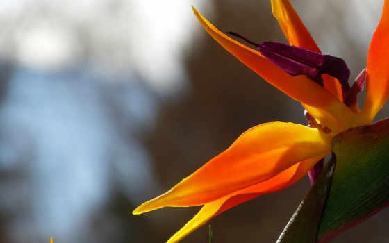 оранжевый цветок Фон № 47249 разрешение 1920x1200