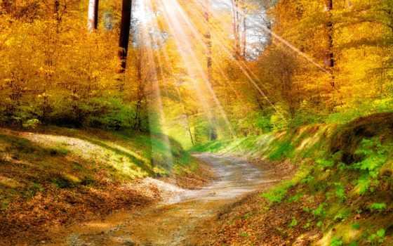 осень, природа, разделе