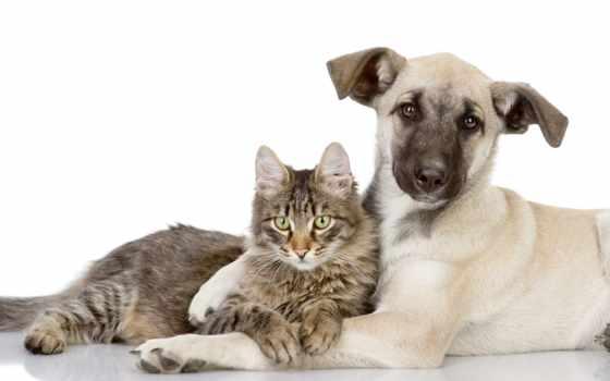 кошки, собаки, кот