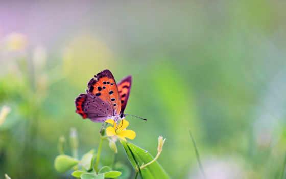 цветы, бабочка, бабочки