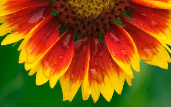 цветы, images, flowers