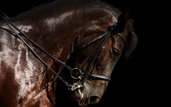 лошадь, красивые, zhivotnye