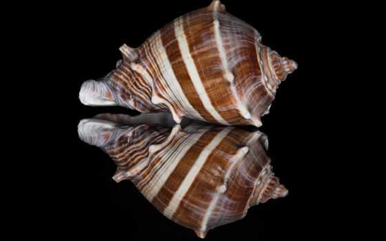 shell, море