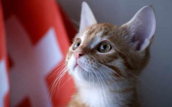 кошка, смешной, кот, глаз, коты, vzglyad, krylo, сиреневый, красный, птица, kot