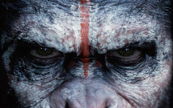 обезьян, planet, revolution