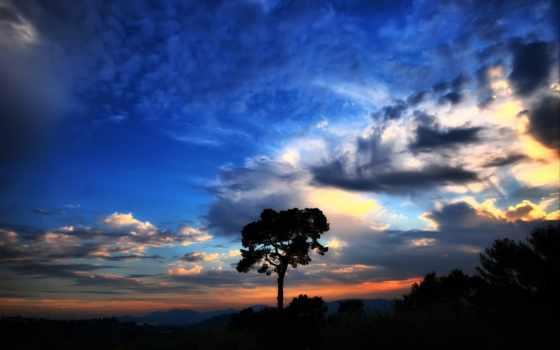 небо, красивое, дерево Фон № 121655 разрешение 1920x1200