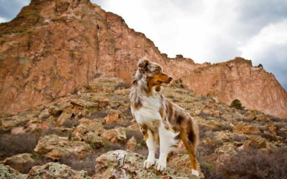 собака, dogs, гора, animal, animals, птица, seymour, desktop,