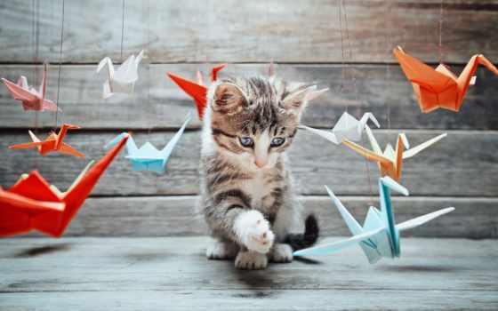 кот, stock, photos, images, crane, free, fotolia, pet, royalty, are,