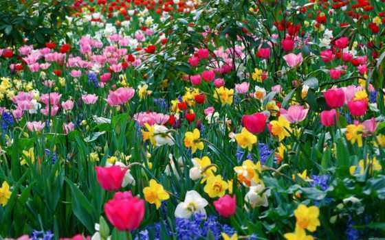 flowers, spring