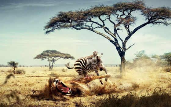 funny, zebra