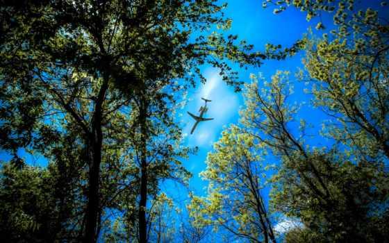 деревья, небо, desire
