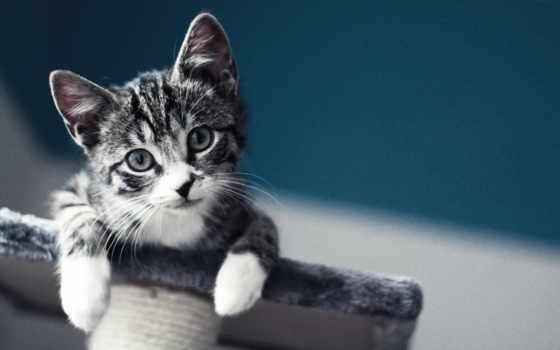 лапки, мордашка, кошачьи