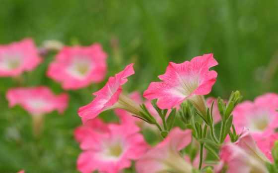 цветы, полевые, полном