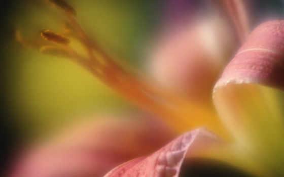 фоны, размытость, цветочные