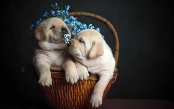 собака, kisa, фото, dogs, осень, отъезд, природу, world, за,