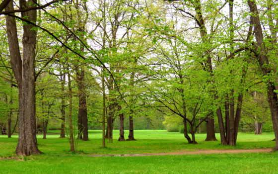 trees, дорога, park, поляна, landscape, природа,