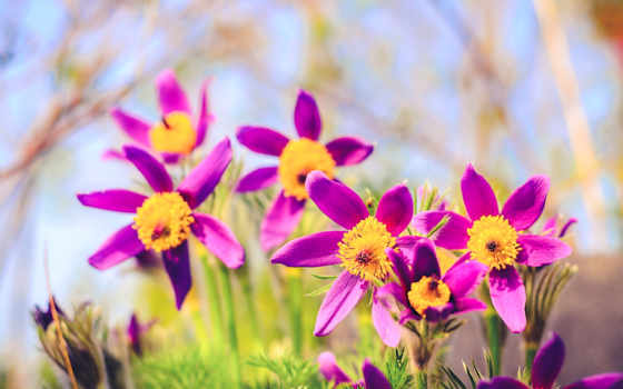 весна, flowers, природа