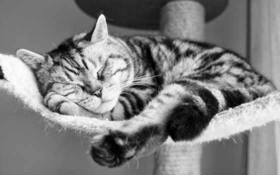 кот, sleeping, заставки, black, чёрно, striped, яndex,