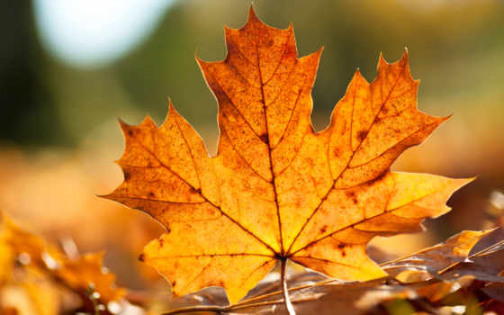 лист, autumn