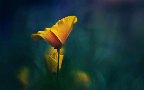 цветок, желтый, стебель