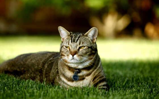 кот, кошек, природа