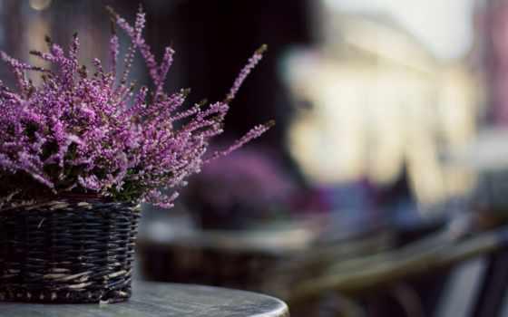 цветы, lavender, чаша