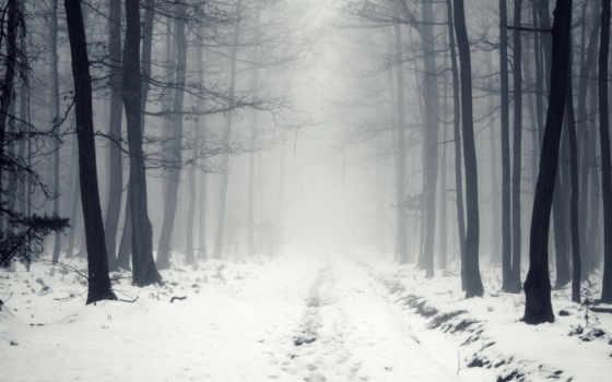 winter, туман, снег
