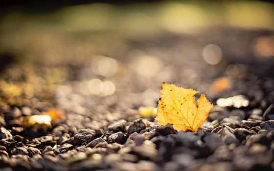 макро, осень, лист