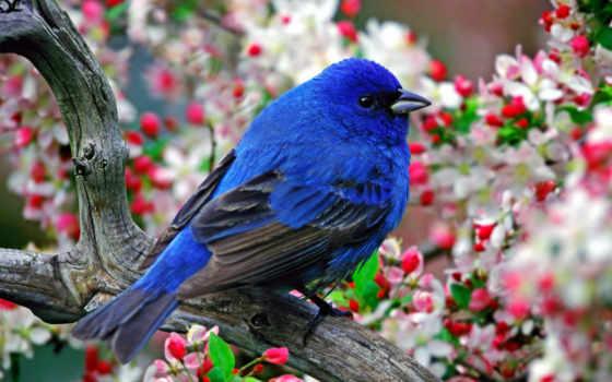 птица, синяя, счастья