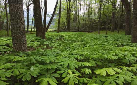 bitki, orman, resimleri, маки, örtüsü, ağaç, yeşil, manzaralar, ikliminin, örtüsüyle,