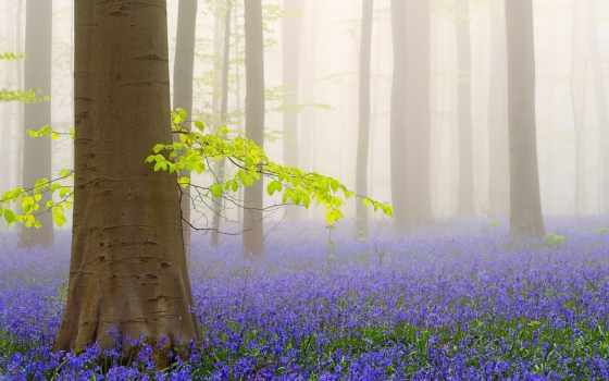 лес, бельгии, колокольчиковый, брюсселя, есть, словно, волшебной, близко, красоты, сошедший,