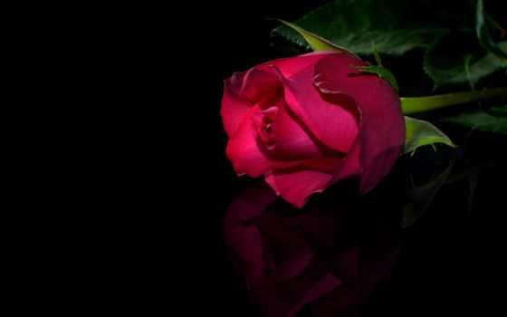 hope, den, за, любов, вяра, рожден, картички, tee, подарявам, мъдрост, щастие,