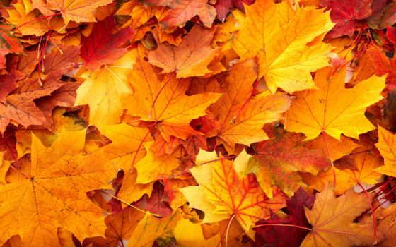 пасть, листья, desktop, фон, leaf, осень, free,