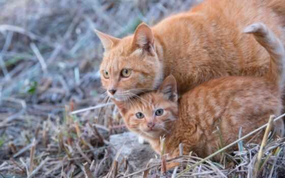 zhivotnye, кошки, кот